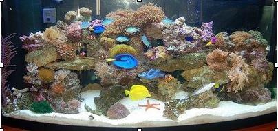Water Temperature For Saltwater Aquarium
